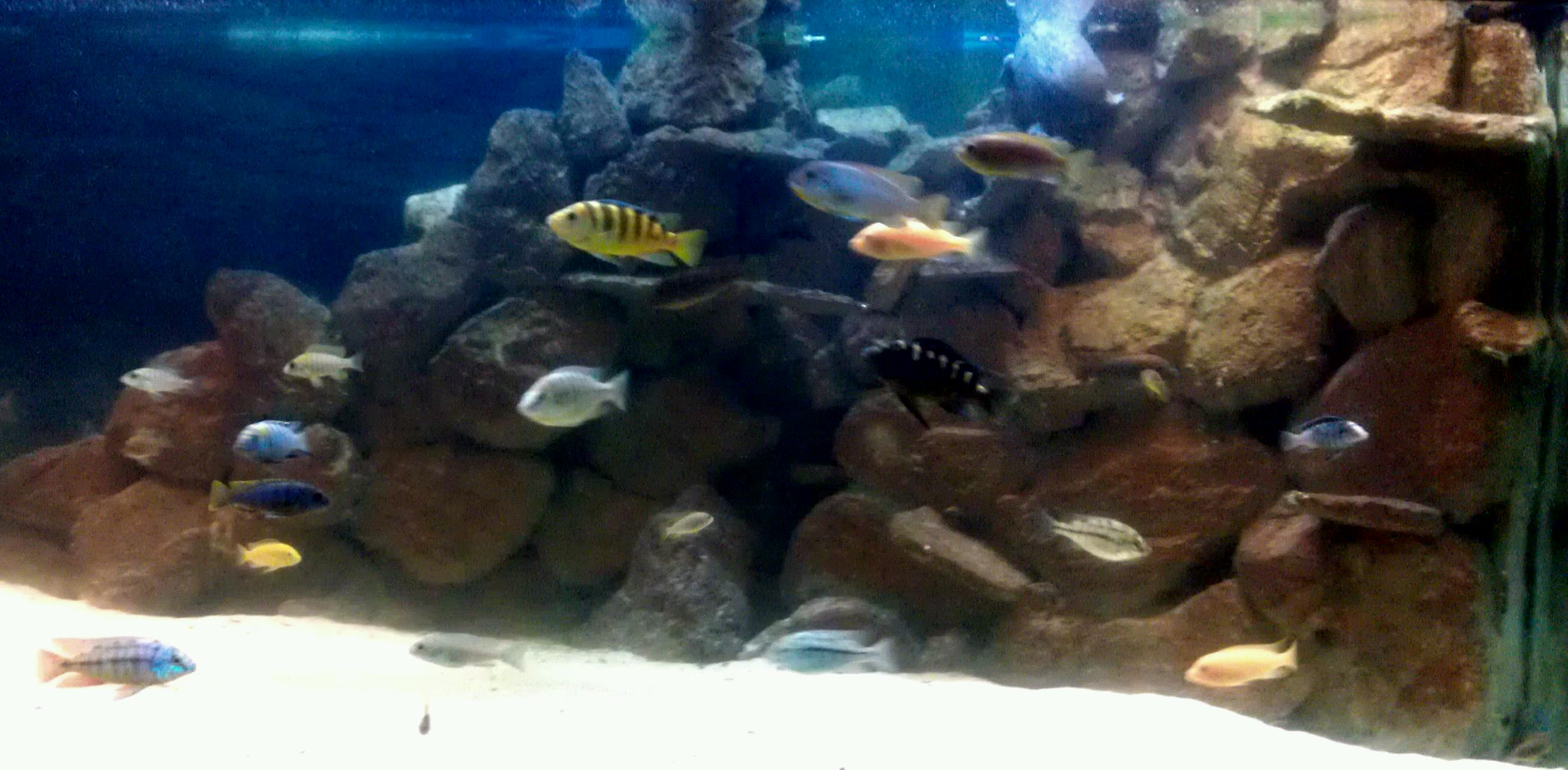 Freshwater fish store near me - 1776 Arnold Industrial Way Concord Ca 94520 Near Lowes And Kinders Meats